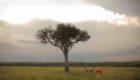 Kenya-Naibor-Camp-6
