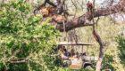 Serengeti-Mwiba-Lodge-24
