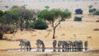 Serengeti-Serengeti-House-19