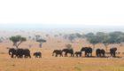 Serengeti-Serengeti-House-20