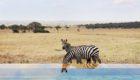 Serengeti-Serengeti-House-3