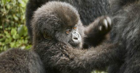 One&Only Gorilla's Nest Luxury Accommodation