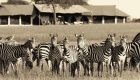 tanzania-sabora-tented-camp-12